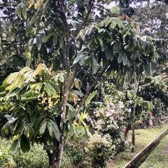 Kranji Farm User Photo