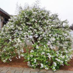 Xixia Mushi Manor User Photo