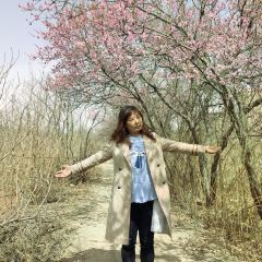 Huaguo Mountain Forest Park User Photo