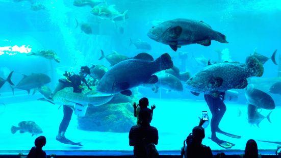 盛貝特海洋水族館