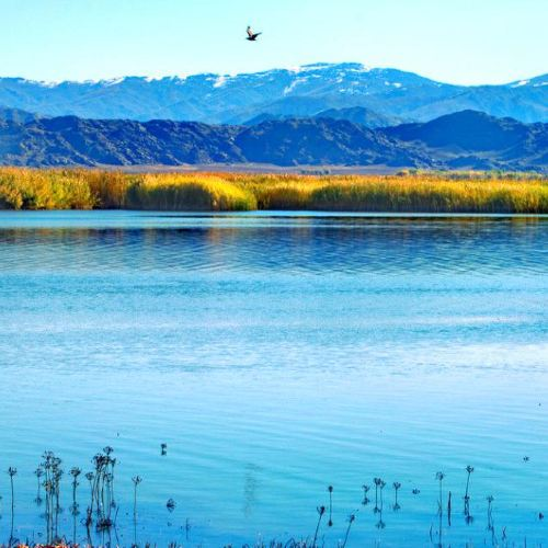可哥蘇裡湖
