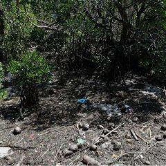 Mangrove Nursery User Photo