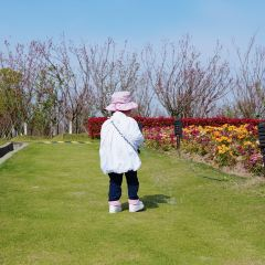 Zhoupu Sea of Flowers User Photo