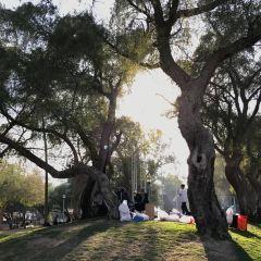 Mushrif Park User Photo