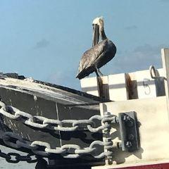 海鷗的停車場用戶圖片