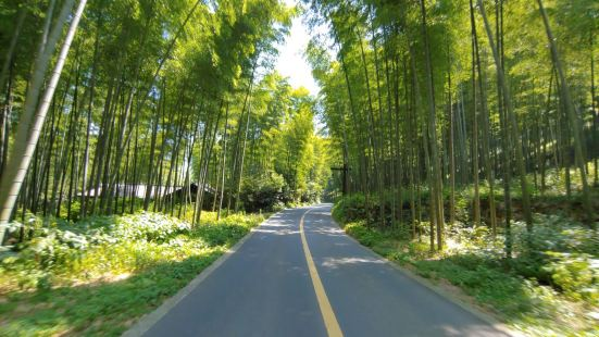 fresh air in the bamboo forest