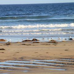 Olango Island User Photo
