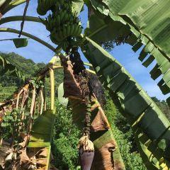 Bao Sheng Durian Farm User Photo