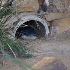 塔斯馬尼亞動物園用戶圖片