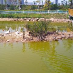Haiwan Ecology Wetland Park User Photo