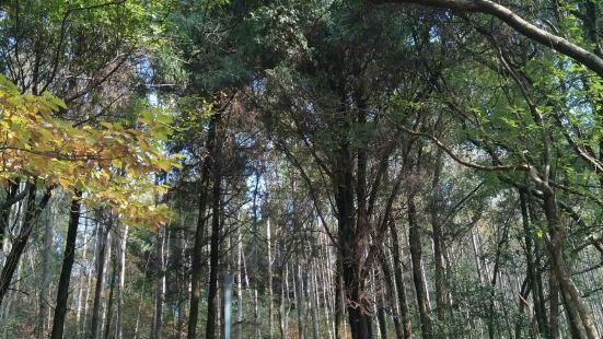 東湖吹笛景區-馬鞍山森林公園