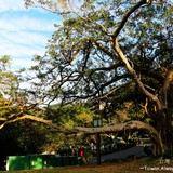 北投復興公園用戶圖片
