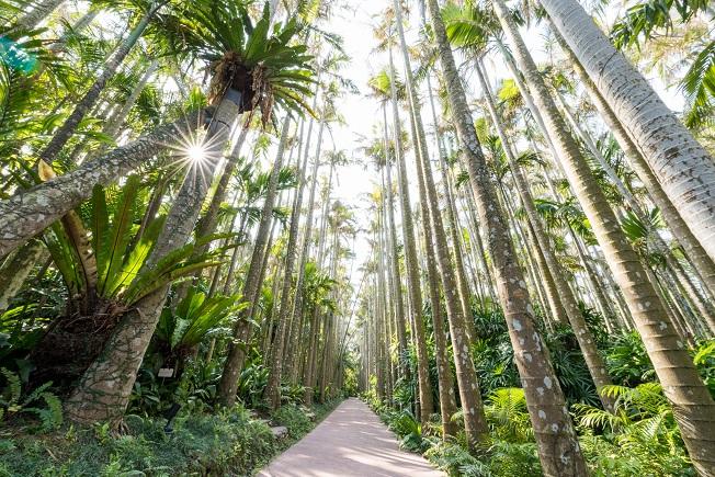 東南植物楽園チケット