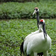 Red-crowned Crane Ecological Park User Photo