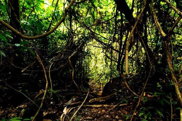 Gua Kelam Recreational Park