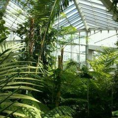 棕櫚樹公園用戶圖片