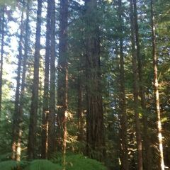 Adrenalin Forest用戶圖片