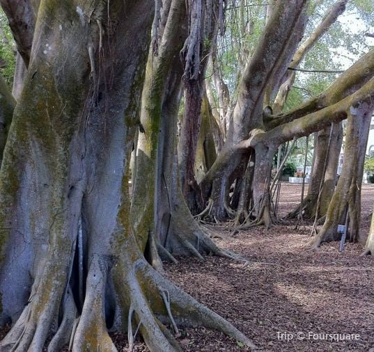 Visit Marie Selby Botanical Gardens: Meeting The Nature