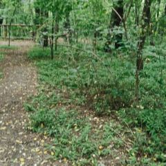 Hongtansi Forest Park User Photo