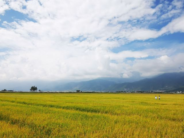 Yunshang Flower Sea