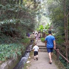 Longyan Dongxiao Forest Park User Photo