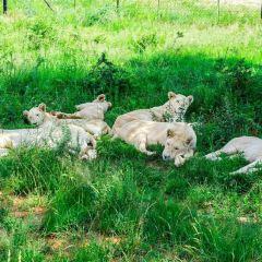獅子園用戶圖片