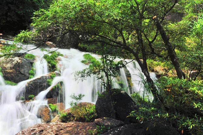東興屏峰雨林公園
