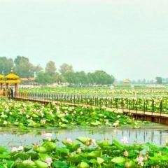 蓮花湖用戶圖片
