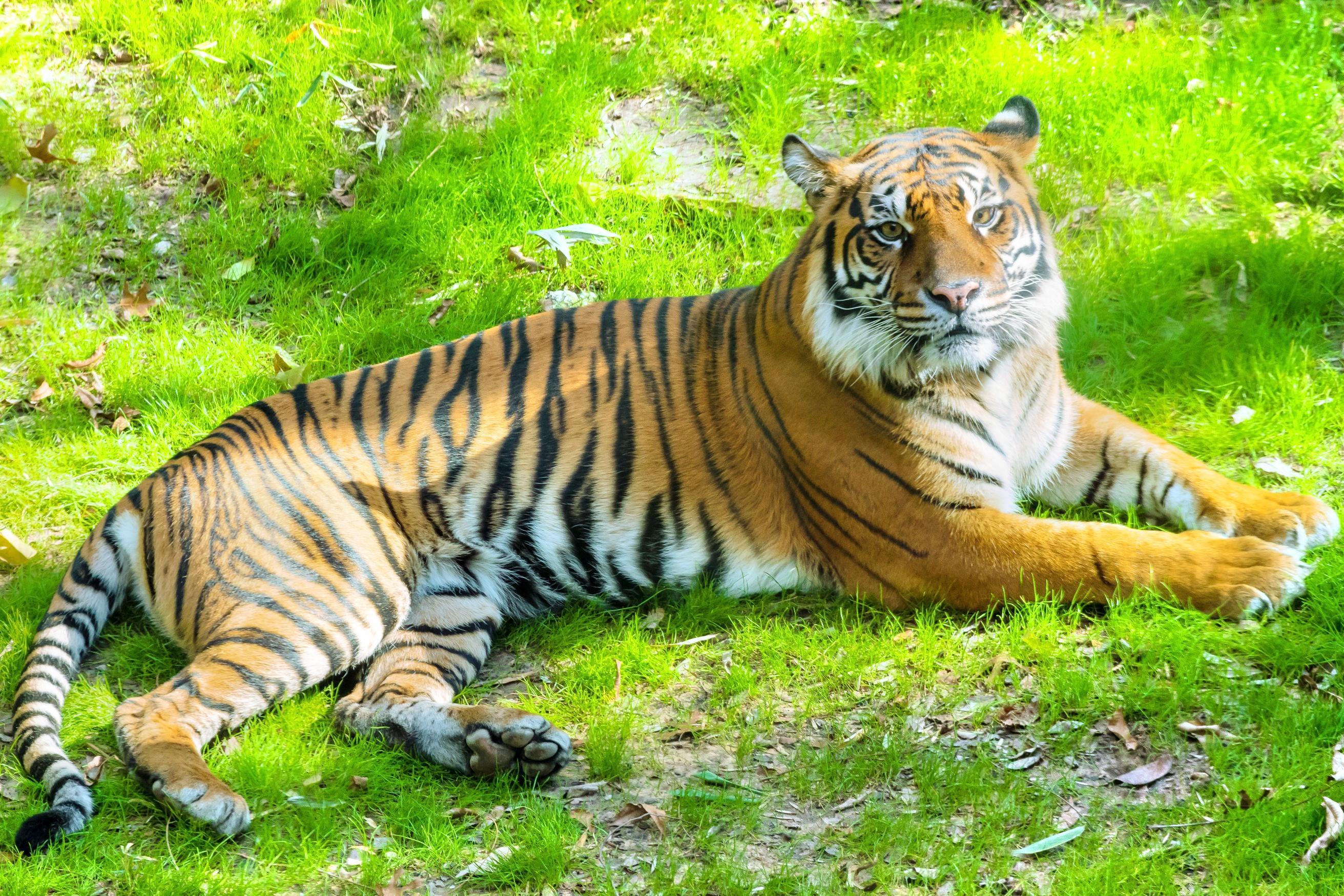 達拉斯動物園