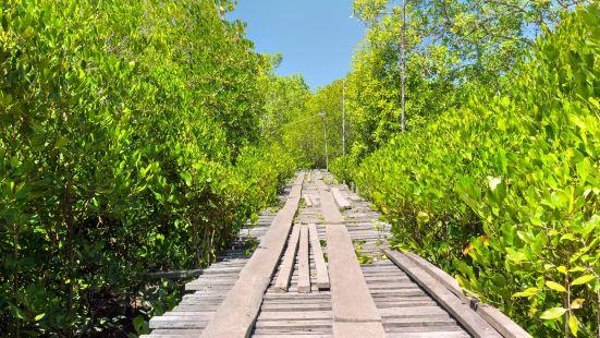 蘭塔紅樹林公園