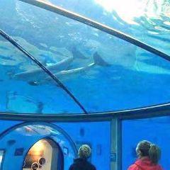印弟安納波里斯動物園用戶圖片