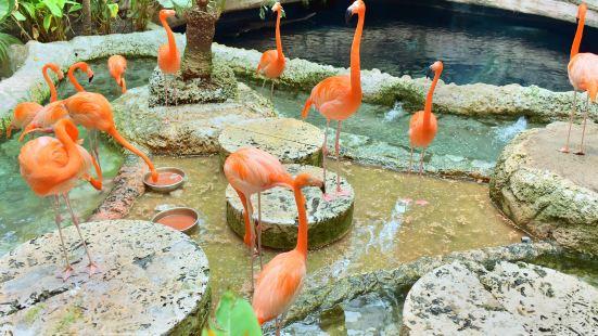 達拉斯水族館