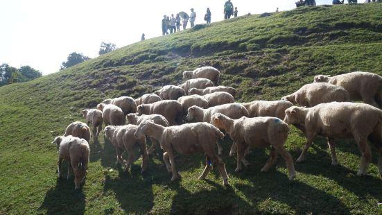 青青草原是在清境农场上,一般客运车到达的都是国民宾馆,然后在