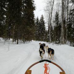 雪橇狗公園用戶圖片