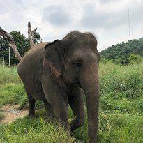 霍特薩丁大象基金會用戶圖片