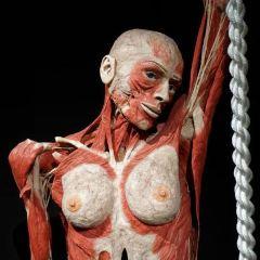 人体の世界のユーザー投稿写真