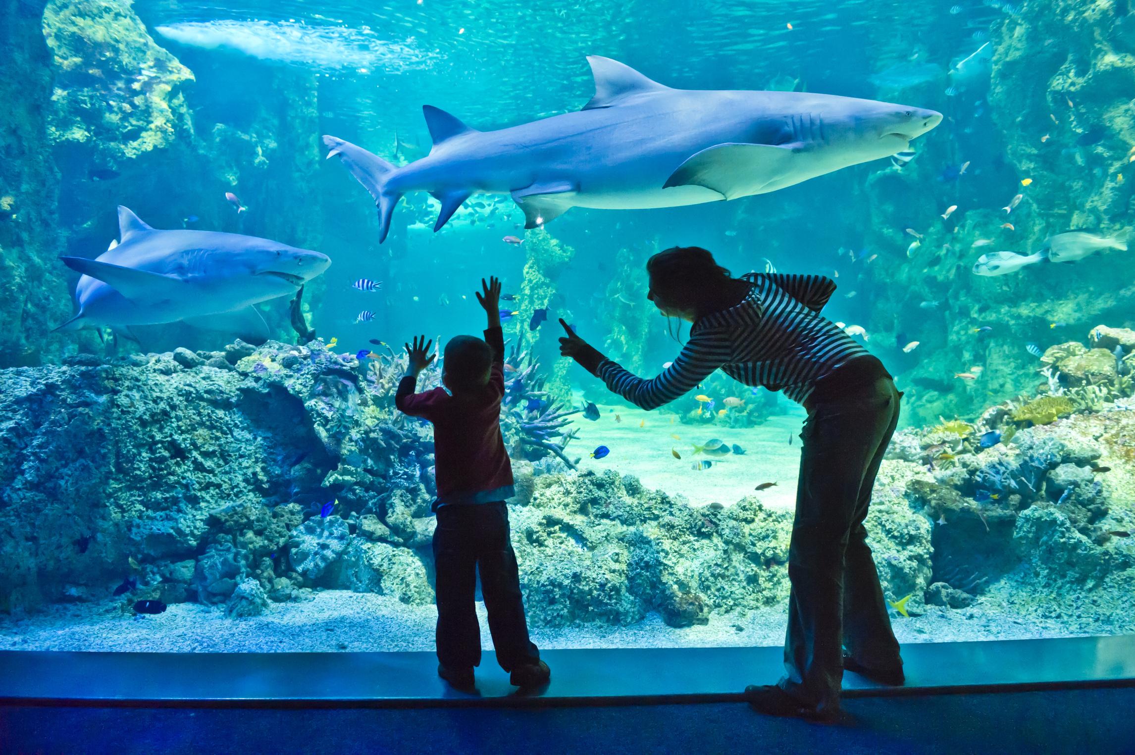 15% Off Promo Code | SEA LIFE Sydney Aquarium Ticket