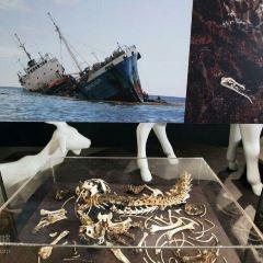盧塞恩自然博物館用戶圖片