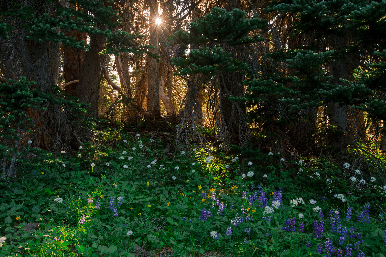 美國西雅圖雷尼爾山國家公園一日游【可免費送機丨中文導遊丨拼車丨西雅圖往返】