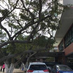 榕樹頭酒店用戶圖片