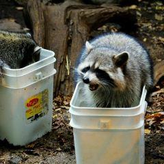 蒙特利爾自然生態博物館用戶圖片