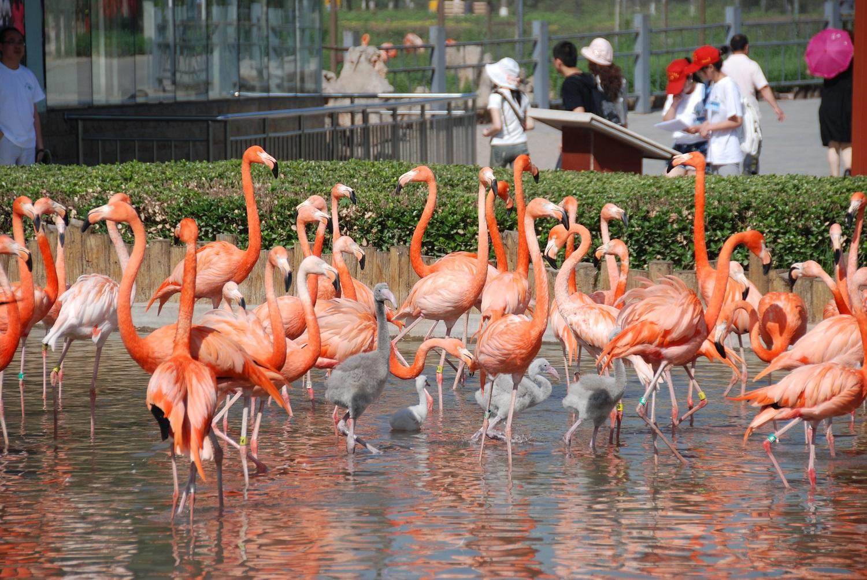 石家荘市動物園