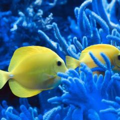 Kelly Tarlton's SEA LIFE Aquarium User Photo