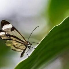 Cockrell Butterfly Center User Photo