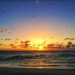 バード島のユーザー投稿写真