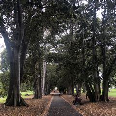 Treasury Gardens User Photo