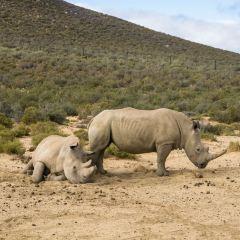 Aquila Private Game Reserve - Day Trip Safari User Photo