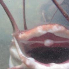 Catfish Farm用戶圖片