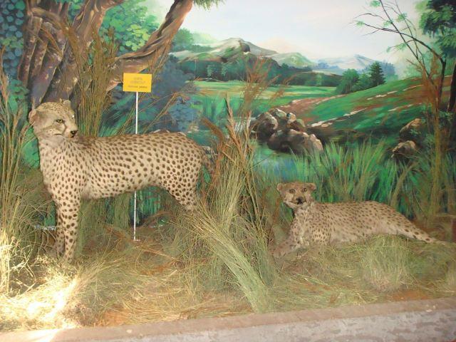 Mozambique National Ethnographic Museum