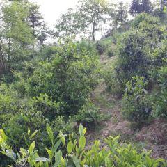 茶馬古道風景區用戶圖片